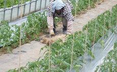 Agrihome Tantotanto - Organic vegetables harvesting