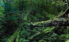 平和小館白河 享受屋久島的水跟大自然跟星空