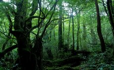 Heiwash kan Shirako - Enjoy the nature of Yakushima