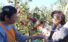 農家民宿 松之助 蘋果果農家民宿