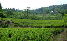 2食付き農泊 世界農業遺産認定の地で農業体験