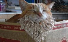 ネコと遊べる夢時間