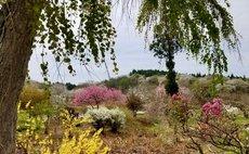 春には桜が咲き お花見も出来る -夢見る老止の館-