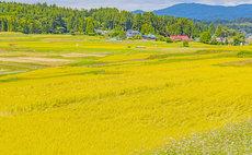 """Nominshoku Toku San"" Rural Stay"