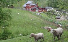 Village of farminanima