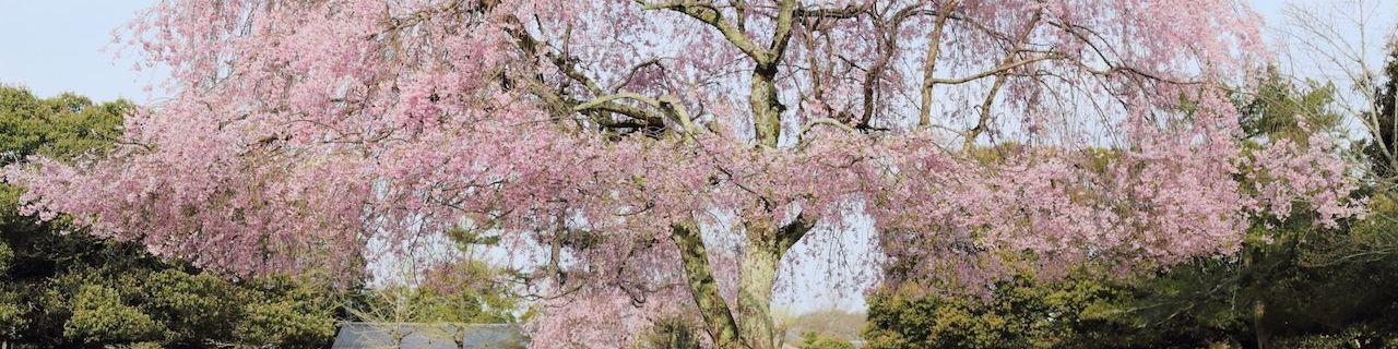 Sakura Recommend
