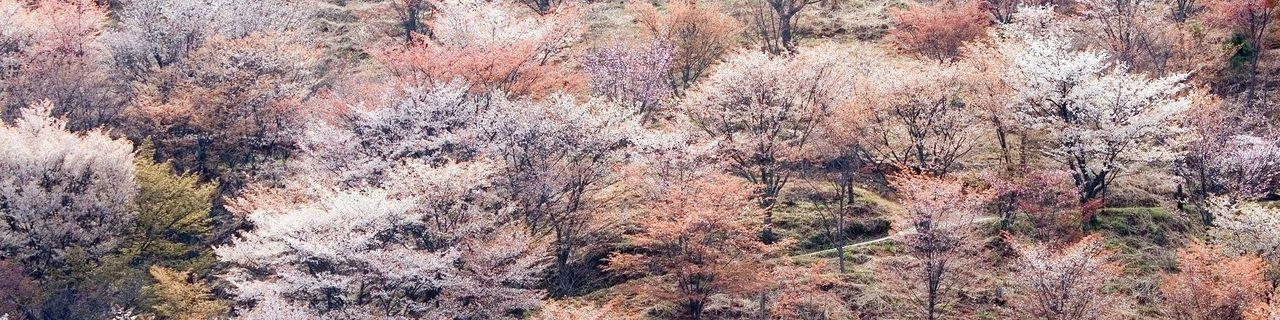 奈良吉野山之周边住宿