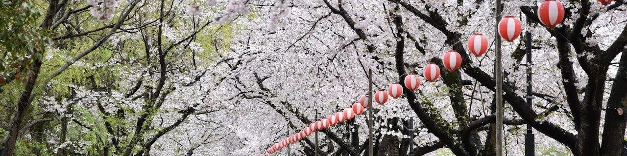 日本人气樱花景点之住宿